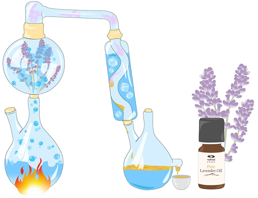 Picture of lab equipment that shows how the production process of essential oils is carried out. The end result shows PURE lavender oil in a bottle.